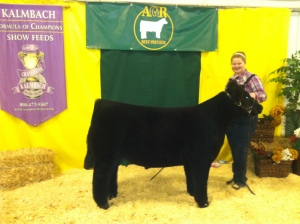 Champion lightweight Crossbred steer - 2013 MSU AGR Preview show. Raised by Thelen. Shown by Madison Welshans.