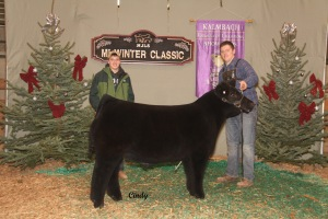 Reserve Champion Division 4 - Crossbred Steer. Shown by Justin Ruggles. Raised by Schneider Farms.