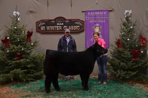 Reserve Grand Champion MaineTainer Steer - 2013 Michigan Winter Classic. Raised by Dave Caffee. Sold privately, fall of 2013. Shown by Heather Berry.